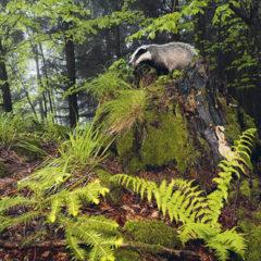 Kalendarz wieloplanszowy Świat polowań (4)