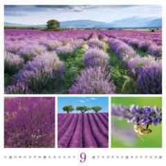 Kalendarz wieloplanszowy Colours of Nature - przykładowa karta