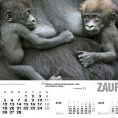 Kalendarz wieloplanszowy Ethos (2)