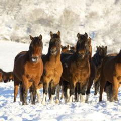 Kalendarz wieloplanszowy Konie (1)
