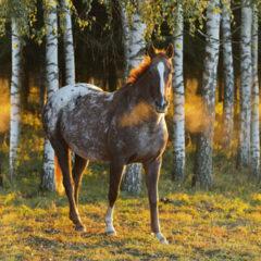 Kalendarz wieloplanszowy Konie (10)