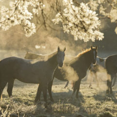 Kalendarz wieloplanszowy Konie (11)