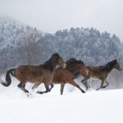 Kalendarz wieloplanszowy Konie (12)