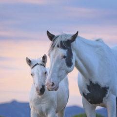 Kalendarz wieloplanszowy Konie (2)