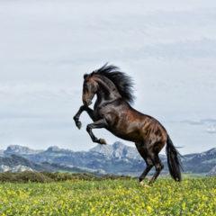 Kalendarz wieloplanszowy Konie (3)