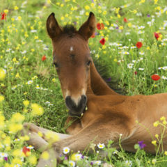 Kalendarz wieloplanszowy Konie (4)