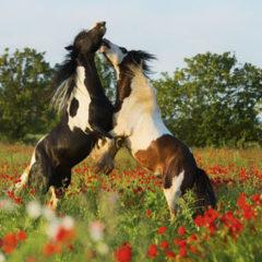 Kalendarz wieloplanszowy Konie (5)