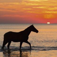 Kalendarz wieloplanszowy Konie (7)