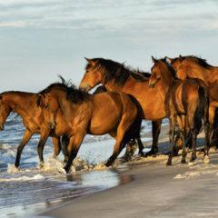 Kalendarz wieloplanszowy Konie (8)