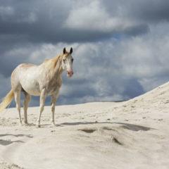 Kalendarz wieloplanszowy Konie (9)