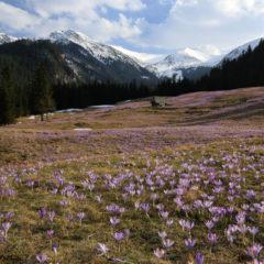 Kalendarz wieloplanszowy Tatry w panoramach (4)
