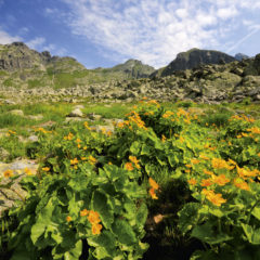 Kalendarz wieloplanszowy Tatry w panoramach (5)