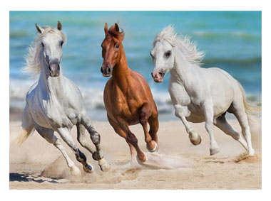 kalendarz jednodzielny Konie w galopie