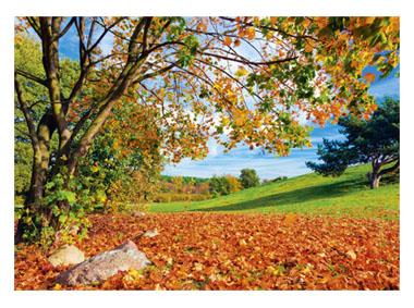 kalendarz trójdzielny - Jesienna polana