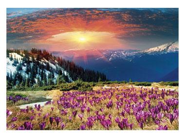 kalendarz trójdzielny Krokusowa polana