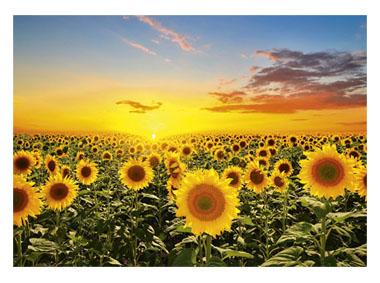 kalendarz trójdzielny Słoneczniki