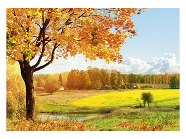 kalendarz trójdzielny duży Jesienna polana