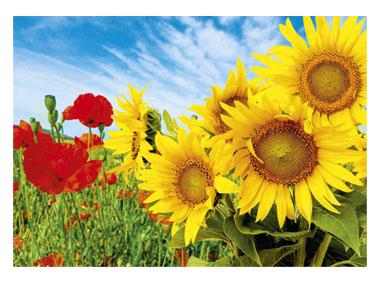 kalendarz trójdzielny duży Maki i słoneczniki