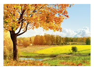kalendarze trójdzielne Jesienna polana