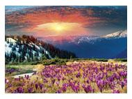 kalendarze trójdzielne Krokusowa polana