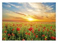 kalendarze trójdzielne Makowa łąka