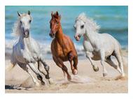 kalendarze trójdzilene Konie w galopie